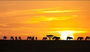 Sunset over Serengeti Plains