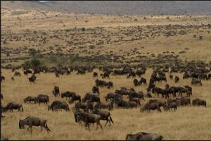 Serengeti 7 Days Safari Tour Packages