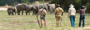 Walking safari in Selous