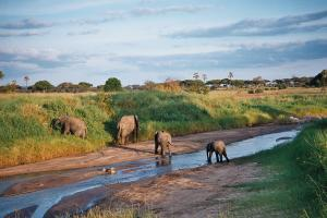 Elephants in Tarangire River
