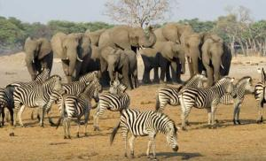 Tarangire National Park Day Tour Packages