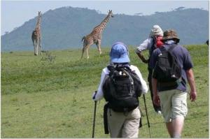 Walking safari in Ngorongoro