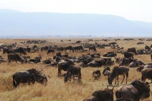 Great Migration Tour In The Serengeti