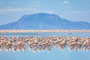 4 Days Tour In Lake Natron Packages